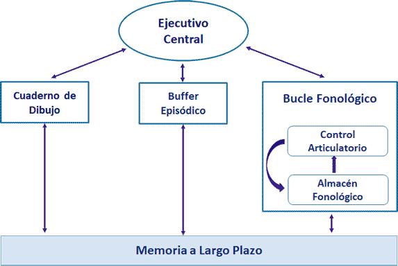 Modelo de Memoria de Trabajo, Memoria operativa, (Baddeley)